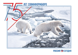 """2016-192 Russia Russland Russie Rusia Postal  Card """"B"""" White Bear With Cub In The Barents Sea-Animals-Fauna-bears - Arctic Wildlife"""