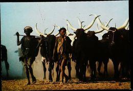 Niger  Bergers Bororo 1980 - Niger