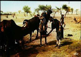 Niger Scène De Vie Bororos à Tilia  N°7045 - Niger