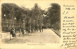 028 888 - CPA - Pays-Bas - Rotterdam - Diergaarde - Rotterdam
