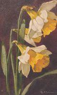 Illust. C. KLEIN .Fleurs. JONQUILLES Sur Fond Noir . Ref. S.T.Z.F.N°  505 - Klein, Catharina