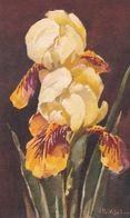 Illust. C. KLEIN . Fleurs . GUEULES DE LOUP Jaunes/orange Sur Fond Noir. Ref S.T.Z.F. N° 504 - Klein, Catharina