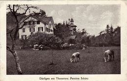 Därlingen Am Thunersee. Pension Schärz, 1921 - BE Berne