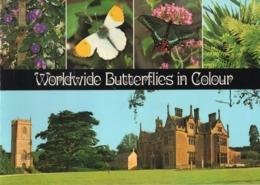 Boek / Worldwide Butterflies In Colour Met Zeer Mooi Foto's (Engels) - Wildlife