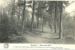 KEMMEL  -  Avenue Du Mont - Heuvelland