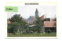 Eguisheim : Le Parc à Cigognes - Francia