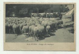 ALA STURA - GREGGE ALLA MONTAGNA 1916 VIAGGIATA   FP - Otros
