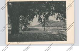 0-4712 KELBRA, Alte Linde Und Blick Auf Rothenburg - Kelbra