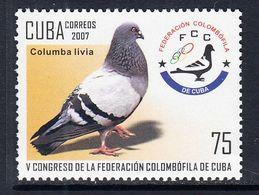 2007 Cuba Pigeons Birds Complete Set Of 1 MNH - Neufs
