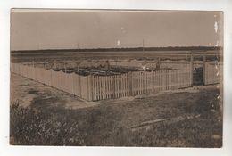 8428, FOTO-AK, WK I, Deutsche Heldengräber Bei Ostrow, Russisch О́стров, Russland - War 1914-18