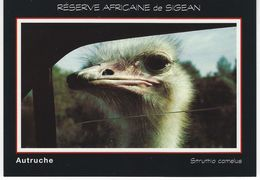 ANIMAUX - RESERVE AFRICAINE DE SIGEAN - AUTRUCHE - Uccelli