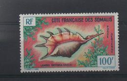 LOT 152 -  COTE DES SOMALIS P.A N° 32 * - COQUILLAGE  - Cote 12.00 € - Côte Française Des Somalis (1894-1967)