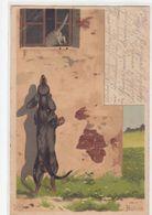 Dackel Jagt Katze - Signiert Mailick - Int. Schweizer Stempel - 1904      (A-236-200218) - Dogs