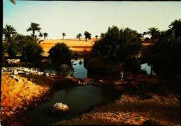TCHAD  Point D'eau Près De Faya - Tchad