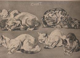 Superbe Chromolitho De Mathurin Méheut  Chat Chats , Planche 6 De La Série Animaux  Publiée 1912 - Lithografieën