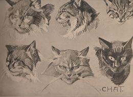 Superbe Chromolitho De Mathurin Méheut  Chat Chats , Planche 7 De La Série Animaux  Publiée 1912 Très Expressif - Lithografieën
