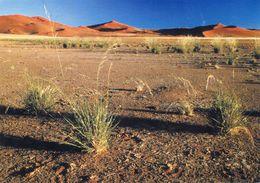 Namibia - Road To Sossusvlei - Namibia