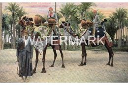 CHAMEAUX PORTANT LES CYMBALIERS DES NOCES ARABES OLD COLOUR POSTCARD EGYPT - Egypt