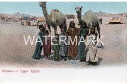 BICHARIS IN UPPER EGYPT OLD COLOUR  POSTCARD  EGYPT - Egypt