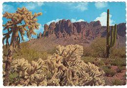 SAGURO CACTUS - Cactus