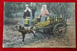 CPA 1912 En Couleur - Vieux Métiers - Laitières Flamandes - Attelage/ Chien - Venters