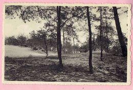 Kasterlee - Zicht Aan Den Berg - 1950 - Kasterlee