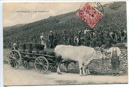 CPA 1906 * MACONNAIS Les VENDANGES * Attelage Boeufs Gros Plan - Bourgogne