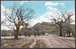 CPA Carte Photo - Soudan - The Fasher Road  - 1964 - Sudan