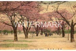 UNUSUAL TOKYO CHERRY BLOSSOMS UYENO PARK OLD WOOD POSTCARD JAPAN TOKIO - Tokyo