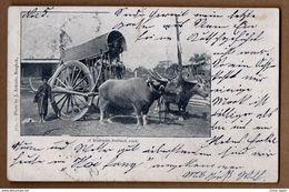 1903 SIAM Bangkok Siamese Bullock Cart Used Postcard Cpa Thailande Thailand Kais. Deutsche Marine Schiffspost SMS Tiger - Thailand