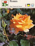 Fleurs & Plantes - Rosiers Rose Charme De Vienne Rosacées Hybrides De Thé 1983 Sape Madrid Phot. D. Lecourt-Jacana - Fiches Illustrées