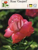 Fleurs & Plantes - Rosiers Rose Gaujard Rosacées Hybrides De Thé 1983 Sape Madrid Phot. Het Spectrum - Fiches Illustrées