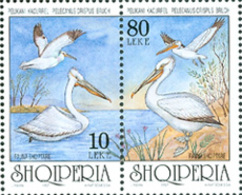 ALBANIE 1997 - Oiseaux Endémiques - Le Pélican -2 V. - Pellicani