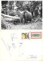 Elefante (francobollo Congo Belga). Viaggiata - Elefantes