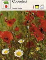 Fleurs & Plantes - Coquelicot Papaver Rhoeas Papavéracées Europe 1983 Sape Madrid Phot. Lorman-Salmer - Fiches Illustrées