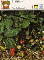 Fleurs & Plantes & Fruits Fraisiers Fraise Red Gauntlet Rosacées 1983 Sape Madrid Phot. J.P. Champroux-Jacana - Fiches Illustrées