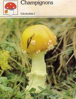 Fleurs & Plantes & Champignons Généralités Chapeau Pied 1983 Sape Madrid Phot. Massagué-Salmer - Fiches Illustrées