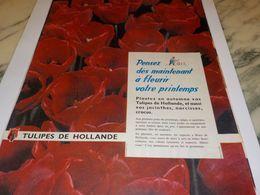 ANCIENNE  PUBLICITE TULIPES D HOLLANDE 1958 - Advertising