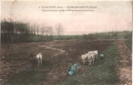 CPA 60 (Oise) Liancourt - Etablissements Bajac, Charrue Brabant Double Et Herse écrouteuse-émoteuse 1911 Couleur Signatu - Liancourt