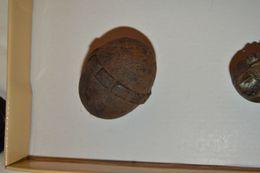 Grenade Eierhandgranate Neutralisé 14/18 - Armas De Colección