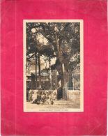 DEPT 40 - Le Chene De SAINT VINCENT De PAUL - GIR - - Saint Vincent De Tyrosse