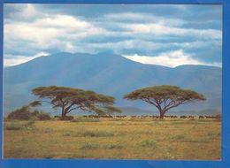 Tansania; Serengeti - Tanzanía