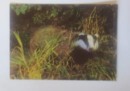 Spendenkarte   DJH  Dachs  1950  ♥ (28187) - Timbres