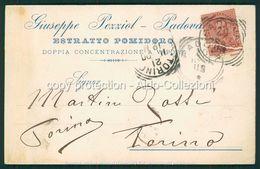 Padova Cartolina Pubblicitaria Estratto Pomodoro Pezziol FP P538 - Padova