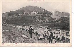 Environs D'AX-LES-THERMES - Plateau Du Col De Puymorens ( Bergers Et Leur Troupeau). - France