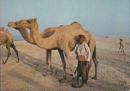 Bahrain - Camel And Herdsman - 2x Nice Stamps - Bahrain