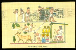 EGYPT * CPA *  POSTCARD * THEBES AGRICULTURE SCENES * CIRCULATED 1957 TO BADEN - BADEN  (11) - Egypte