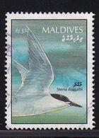 Maldives, Bird Vfu - Maldive (1965-...)
