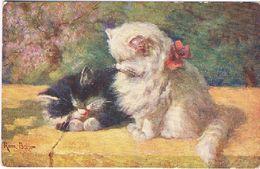 2 Chats - Cats -katzen - Poesjes - - Gatti