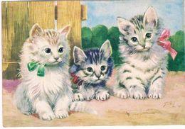 Chats - Cats -katzen -3 Poesjes - - Gatti